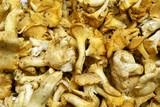 edible fungus poster