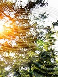 Reflection of sunset and bamboo in water;Zen atmosphere. poster