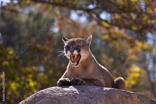 Keuken foto achterwand Puma Puma 4