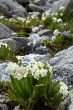 flowers and stream