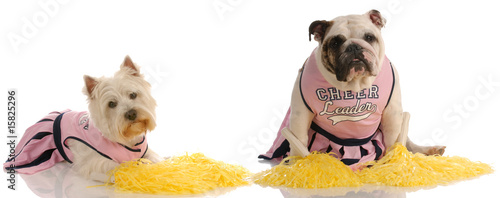 two dogs dressed as cheerleaders