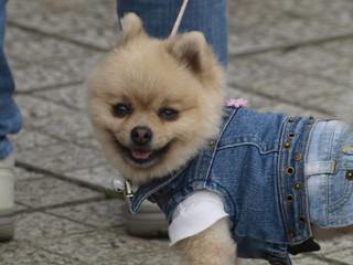 Perro vestido con ropa vaquera