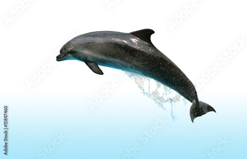 Foto op Aluminium Dolfijn Jumping Dolphin