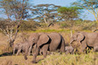 Elephant family crossing the river