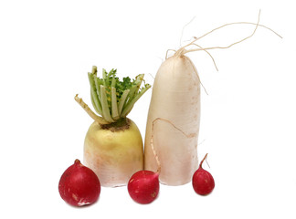 white and red radish