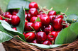 Some beautiful sweet cherry fruit in a basket