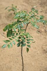 Omega Plant