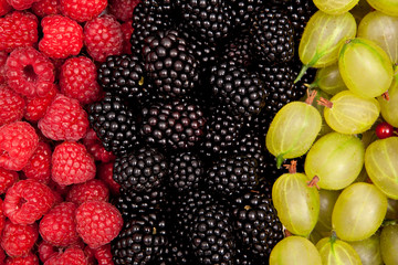 red currants, gooseberries and blackberries closer