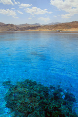 Seascape with coral reef. Red Sea. Egypt.