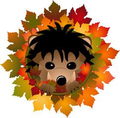 hedgehog and autumn leaves
