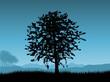 roleta: Sunset tree