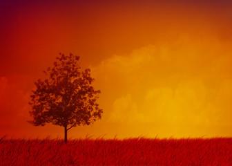 Albero su campo in arancione