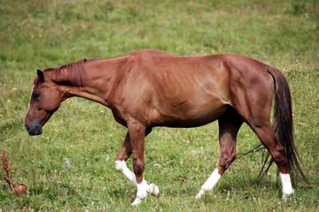 Il cavallo tra i prati a Sauris
