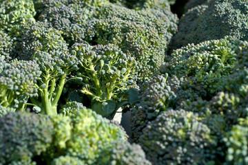 Broccoli Texture