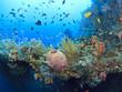 Leinwanddruck Bild - Underwater wreck of the Liberty
