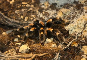 Spider 2 - Araignee