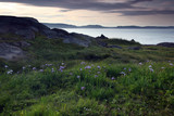 View From Cape Spear poster