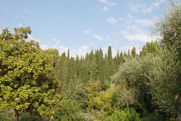 cipressi e bosco