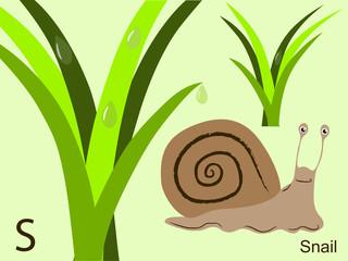 Animal alphabet flash card, S for snail
