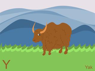 Animal alphabet flash card, Y for yak