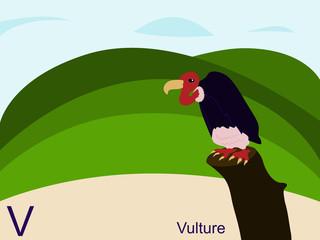 Animal alphabet flash card, V for vulture