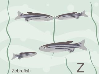 Animal alphabet flash card, Z for zebrafish