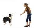 maitresse lançant une croquette à son chien - récompense