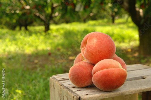 canvas print picture orchard peaches