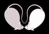 Lovely fluffy mice on a black background poster