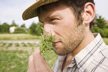 Bauer oder Gärtner riecht an Rosmarin