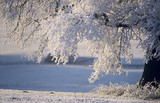 Germany, Bavaria, snow-covered tree on landscape