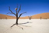 Africa, Namibia, Deadvlei, Dead trees in the desert