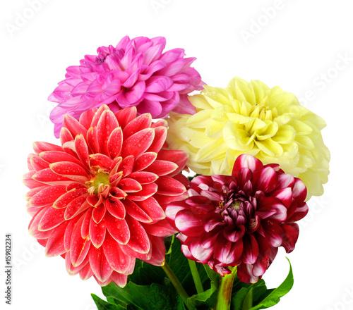 Foto Spatwand Dahlia Background of dahlia flowers