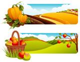 Fototapety Harvest