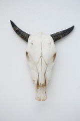 Close-up of a cow skull mounted on the wall