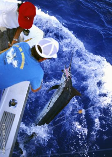釣り上げられるカジキ Poster