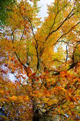 Herbst-Geäst