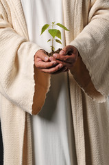 Jesus hands holding a plant