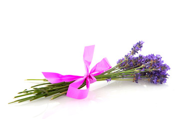 lavender with pink bow