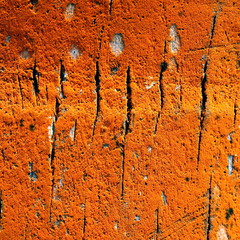 Texture : moisissure du cocotier