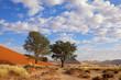 Desert landscape with Acacia trees, Sossusvlei, Namibia