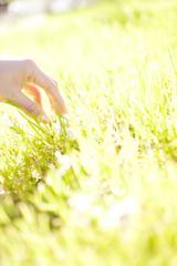芝生に手を添える女性