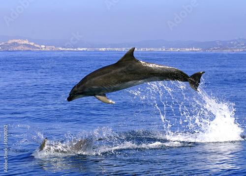 Deurstickers Dolfijn Delfin Sprung