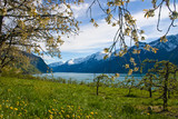 Fjord with apple trees in bloom poster