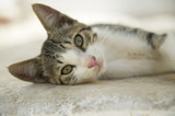 Greece, Naxos, cat lying on floor