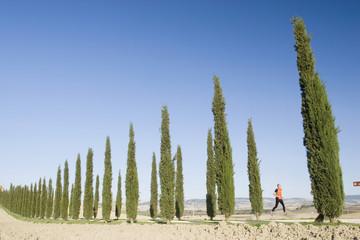 Italien, Toskana, Bäume Zypressen in einer Reihe, Mann Joggen