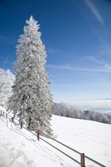 verschneiter Baum