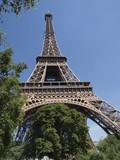 Tour Eifel con vegetacion a sus pies poster
