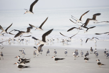 Seagulls at the ocean