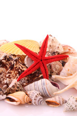 Seastar  and sea shells
